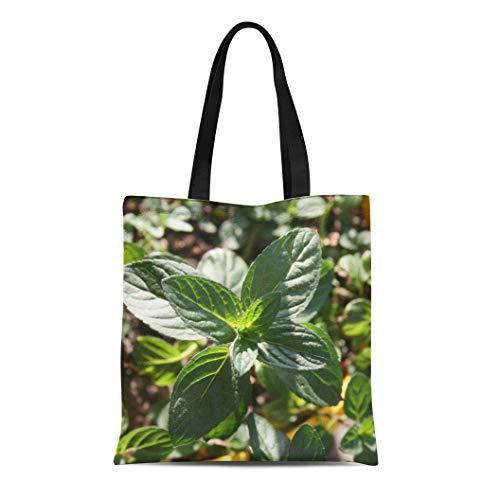 Semtomn Canvas Tote Bag Shoulder Bags Aroma Pedilanthus Tithymaloides Nana Green Devil Backbone Mint Plant Women's Handle Shoulder Tote Shopper Handbag