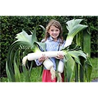 GEOPONICS Seeds: Hot ! 100 Pcs Rare Seeds China Green Onion Sterilization Vegetable Potted Leek Seed in Bonsai Home Garden Plant: 2