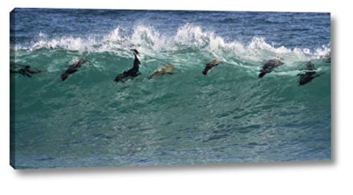South Africa Seals Surfing in Waves by Bill Young - 13