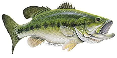 Largemouth bass images galleries with for Bass fish images