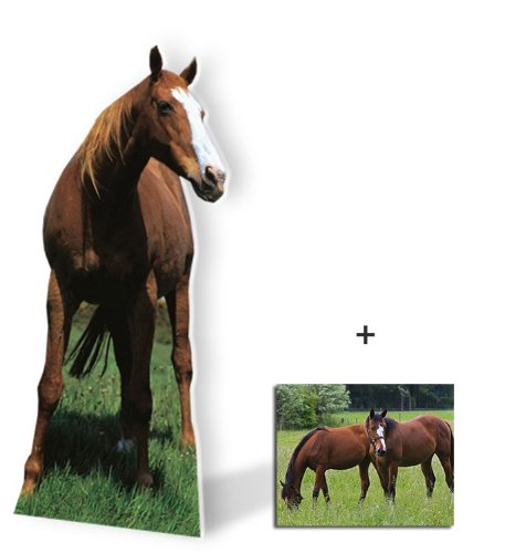 Horse (Mustang) - Wildlife/Animal Lifesize Cardboard Cutout / Standee / Standup - Includes 8x10 (20x25cm) Star Photo