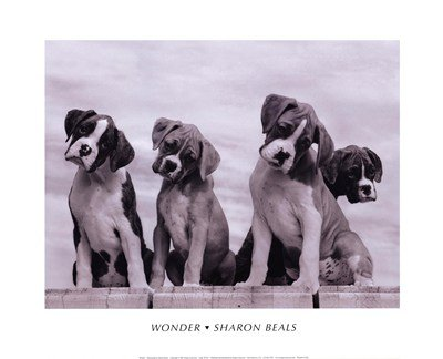 16X20  Sharon Beals Wonder Art Print Poster