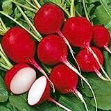 *Seeds and Things Organic Cherry Belle Radish 300 Seeds (23 days) ASA AWARD WINNER Fresh Pack Easy to Grow