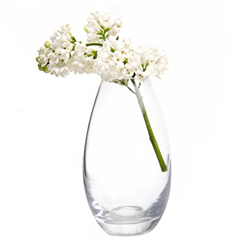 Chive - George Shape 5, Unique Clear Glass Flower Vase, Small and Elegant Oval Bud Vase, Decorative Floral Vase for Home Decor Office Place Settings, Bulk Set of (Oval Shape Glass)