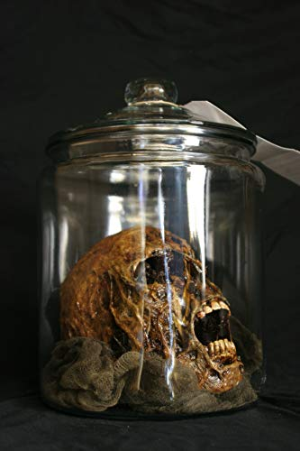 BACK FROM THE GRAVE Rotted Corpsed Human Skull in an Apothecary Jar - Haunted Halloween Horror Prop