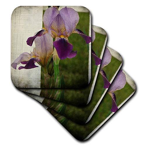 3dRose Cassie Peters Floral - Iris - set of 8 Ceramic Tile Coasters (cst_298907_4)