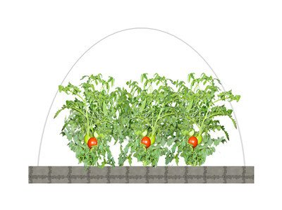 1/5''Dia, 6ft long hoops for Grow Tunnel, Greenhouse, Support For Plant Cover And Seedling Guard White Color, Plant Cover &Frost Blanket For Season Extension Support,40pack by RowTunnel (Image #3)