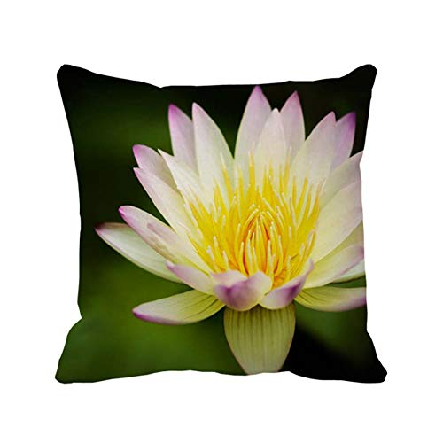 - Flower Lotus Yellow White Water Lily Square Pillow Covers,Decorative 20 X 20 Cotton Throw Pillowcase Decor Cushion Cover