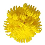 Floral-Kingdom-Artificial-Real-Touch-24-Chrysanthemum-Flowers-Fuji-Spider-Mum-for-Home-Office-Weddings-Bouquets-Pack-of-5-Yellow