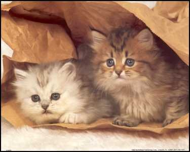 Kittens in Paper Bag Paper Tole 3D Kit 8x10