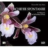 Orchidee spontanee tra Marcarolo la Val Lemme e il Piota
