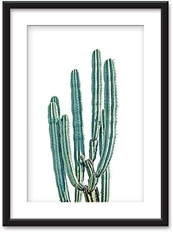Framed Cactus on White Background Black Picture Frames with White Matting