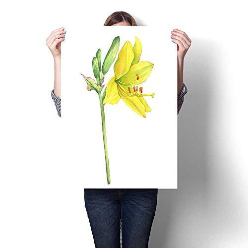 (Canvas Wall Art Branch of flower Hemerocallis lilioasphodelus (also called Lemon Lily Yellow Daylily Custard Lily Hemerocallis flava) Watercolor hand drawn painting illustration isolated on a white)