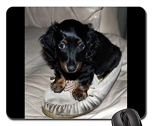 Mouse Pads - Dachshund Puppy Long Hair Mini Dog Pet Canine