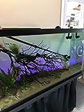 Atlantis Aquatics 5 in 1 Aquarium Cleaning Tools