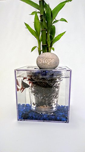 Fish O' Ponics Fish Tank Planter (shipped from US within 2 days) Self-watering Planter, In Home Decor, Desk, Bar Top, Window Sill Water Garden. by Growmanji