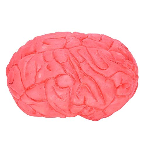 Rubber Brain - Halloween Grim Party Decoration And Prop Rubber Horror Fake Scary Human Brain Haunted House Organ - Scary Size Halloween Mask Party Finger Halloween Suit Brain Mask Arm Human M -