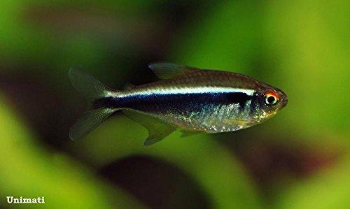 neon fish - 9