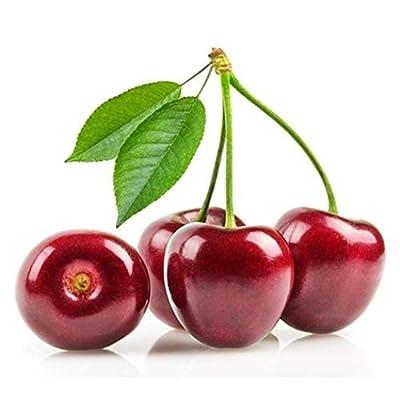 HOTUEEN 20Pcs Organic Fruit Seeds Bonsai Seeds High Germination Rare Home Cherry Seeds Fruits : Garden & Outdoor