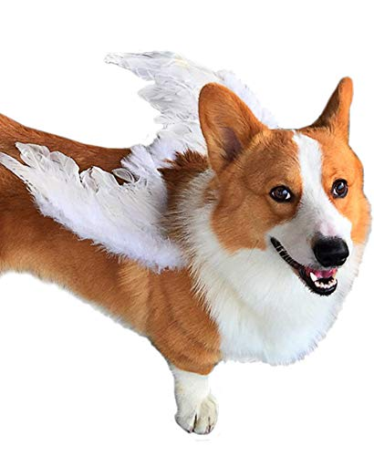 Classic Dog Cat Angels & Demons Wings Pet Dog Cat Costume Accessory Real Feather Wings, Party Costumes Feather Angel Wing -