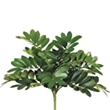 14'' Zamia Bush x13 Green (Pack of 12)