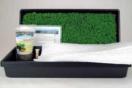 Amazon Com Chia Growing Kit Hydroponic Chia Microgreens Grow Kit