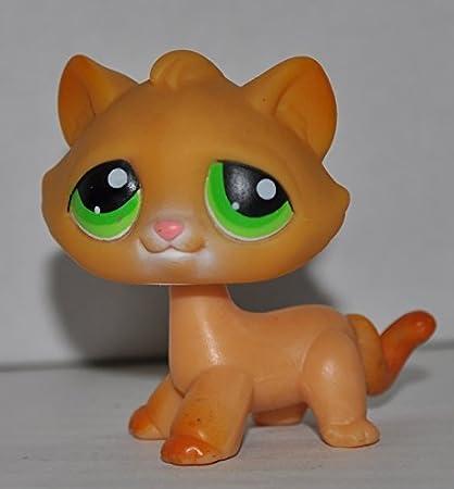 Amazoncom Kitten 110 Paws Spread Orange Green Eyes Littlest