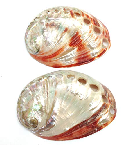 PEPPERLONELY 2 PC Polished Red Baby Abalone Sea Shells, 3 Inch (Lamp Abalone Shell)