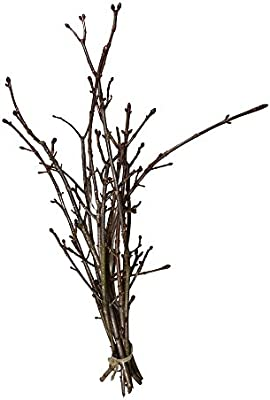 Los Restos ramas Castaña algodón: Decoración – Blühende ramas – Primavera Deko – Ramas de castaño Decorar – Vintage (10 ramas Castaña, aprox. 80 cm): Amazon.es: Jardín