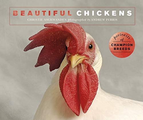 Beautiful Chickens: Portraits of champion breeds
