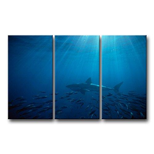 3 Piece Blue Wall Art Painting Great White Shark In Australia Blue Sea Prints