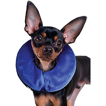 Amazon.com: Collar isabelino Kong Cloud para gatos y perros ...