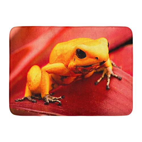 Emvency Doormats Bath Rugs Outdoor/Indoor Door Mat Poison Dart Frog Phyllobates Terribilis Deadly Animal from The Tropical Amazon Rain Forest in Colombia Bathroom Decor Rug 16