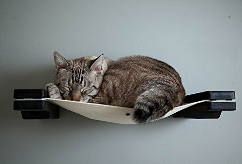 CatastrophiCreations Cat Mod Lounge Handcrafted Wall mounted Cat Tree Shelves,