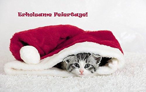 Süße Weihnachtsbilder.Lustiges Katzen Weihnachtskarten Set 12 St Weihnachts Katzen Ideale Weihnachts Grusskarten Für Katzenfreunde Oder Familien Mit Kindern