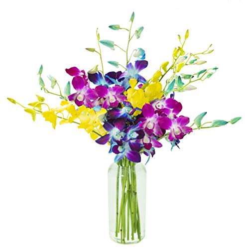 KaBloom Exotic Rainbow Orchid Bouquet of Blue, Purple and Yellow Orchids from Thailand with Vase