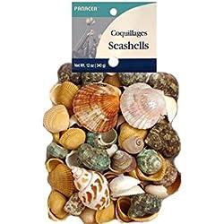 Seashells 12Oz Bag Assorted