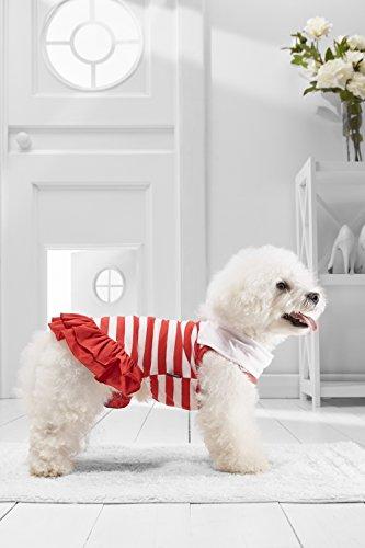 [Small Dog Sundress For Bichon Frise Dachshund Miniature Schnauzer Havanese Pug (Small Size, red,] (Mini Dachshund Halloween Costumes)