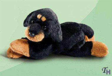 Akc Rottweiler - 7