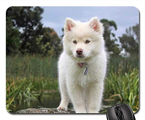 Gaming Mouse Pads,Mouse mat,Nature Dog Cute Puppy Animal Pet Young Doggy -