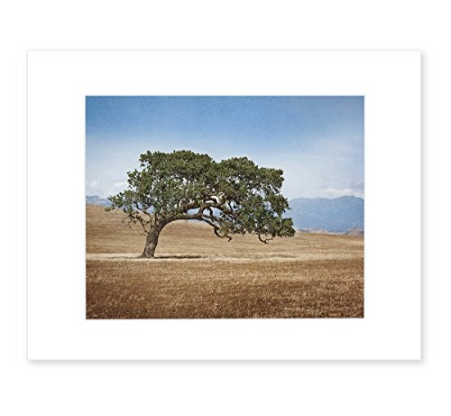 - California Landscape Wall Art, Oak Tree in Wine Country Picture, Rustic Farmhouse Countryside Decor, 8x10 Matted Photographic Print (fits 11x14 frame), 'Windswept'
