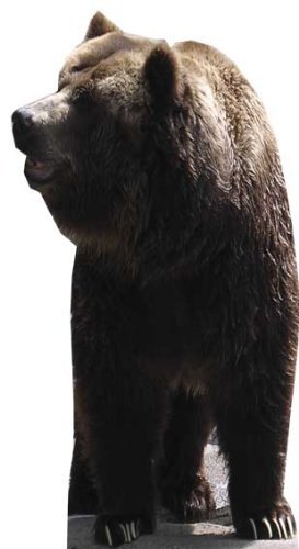 Bear - Wildlife/Animal Lifesize Cardboard Cutout / Standee / Standup