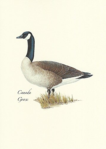 Crest Note Card - Canada Goose Boxed Note Cards-- Set of 8
