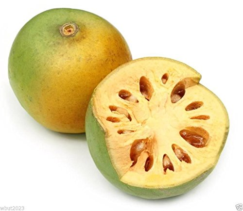 Indian Bael 10 Seeds A.k.a Bengal Quince, Golden Apple, Stone Apple, Aegle Marmelos