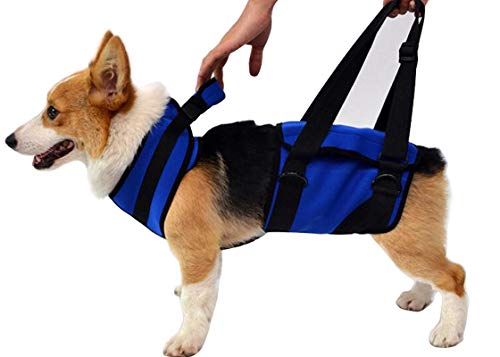 Morezi Full-Body Lifting Dog Harness Vest for Cruciate Ligament Support,Canine Arthritis, Rehabilitation, Poor Stability, Joint Injuries, Mobility and Recovery - Veterinarian Approved - Blue - M