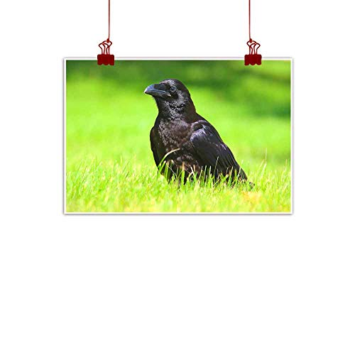 duommhome Light Luxury American Oil Painting Big Black Raven Close-up Photo Canvas Wall Art 20