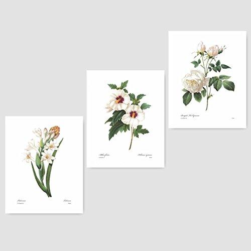 (Set of 3) White Botanical Art (Redoute Flower Prints, Room Wall Decor) Tuberose, Rose of Sharon, Hibiscus – (Womens Premium Hibiscus Antique)
