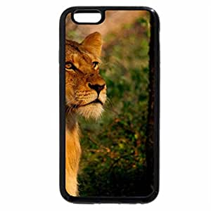 iPhone 6S / iPhone 6 Case (Black) YOUNG LIONESS