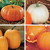 buy Park Seed Fall Rainbow Blend Organic Pumpkin Seeds now, new 2019-2018 bestseller, review and Photo, best price $6.50