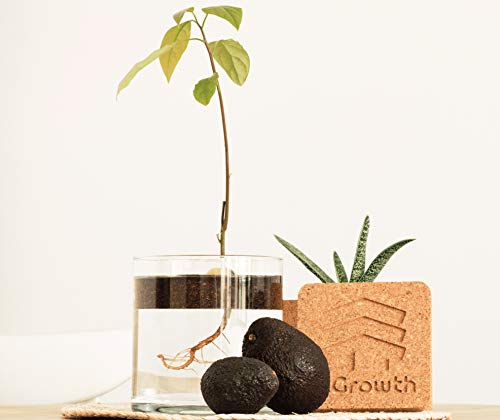 InGrowth Kit jardineria Interior para germinar y Plantar tu arbol Aguacate | Kit ecologico de Corcho para decoracion | Regalo Original para Amantes Aguacate y medioambiente | Kit Experience